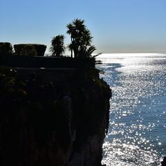 Garden over the bay (pedrik) Tags: cascais portugal d7200 nikkorafsdx35mmf18g gimp square ocean palm tree specularlight