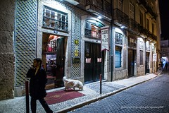 a short story about a white dog in the land of fado (ignacy50.pl) Tags: people city cityscape citylife town dog streetphotography street travel animal night nightview lisbon reportage