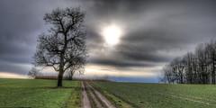Winternachmittag (stega60) Tags: landschaft landscape sonne sun licht light baum tree winter wolken clouds himmel sky weg way nachmittag afternoon stega60 hdr stiched panorama