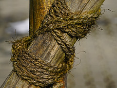 can´t fasten nature (Lutz Koch) Tags: macromondays fastener macro makro baum pfahl seil befestigung fastening tree stake pale post nature natur elkaypics lutzkoch closeup nahaufnahme