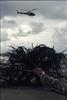 Apocalypse Now (terencekeller) Tags: pentax k1000se k1000 35mm 50mm photofilm analógica terencekeller ektar ektar100 litoral brasil helicóptero palmeira apocalypse