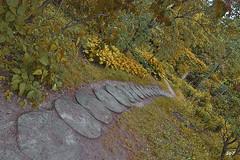 Otoño en el Huerto de la Farmacia.. (svet.llum) Tags: moscú parque otoño naturaleza planta rusia ciudad paisaje