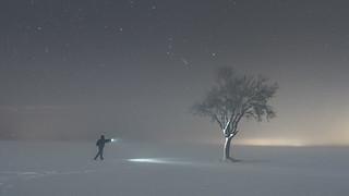 Iluminando arbol en la noche