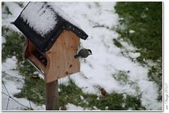 Winter??? (Mr.Vamp) Tags: winter wintertag winterday vogel fütterung vogelhaus mrvamp vamp