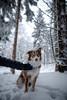 HM2A7557 (ax.stoll) Tags: feldberg frankfurt taunus mountain forest snow winter winterwonderland outdoor nature dog hovawart trees street wanderlust travel