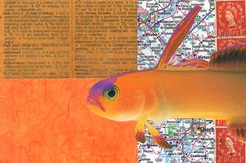 Orange Fish pc
