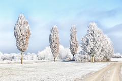 In memory of the last winter (++sepp++) Tags: bayern deutschland graben lechfeld landschaft landscape landschaftsfotografie bavaria germany winter schnee snow kalt cold bäume trees raureif hoarfrost sonnig sunny