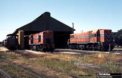 J620 TA1812 R1902 DA1571 3 October 1981 (RailWA) Tags: railwa joemoir philmelling westrail ta1812 r1902 da1571