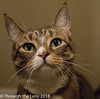 Love Your Pet Day #8/118 (londonlass16 LRPS) Tags: 118picturesin2018 loveyourpetday skittle pet cat 8 8118