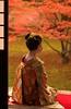 Maiko_20171120_16_8 (Maiko & Geiko) Tags: myokakuji temple fukuno kyoto maiko 20171120 舞妓 妙覚寺 ふく乃 京都 宮川町 河よ志 miyagawacho kawayoshi junkikai