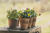 Gardening (Inka56) Tags: newpurposes crazytuesdaytheme 7dwf flowers pots boxforgardeningtools ground bokeh dof