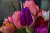 A flower or two, to you my dearest FlickrFriends (evakongshavn) Tags: 7dwf flora tulips flowers purple pink white red orange