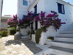 Streets of Alonnisos (lesleydugmore) Tags: street alley greec greekisland alonnisos plants flower green pink steps stair pot sporades window blue door