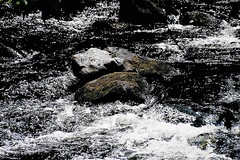 Spring Ritual (Shot by Newman) Tags: northeastus spring river fuji400 shotbynewman nature 35mm whitewater daylight old35mmminolta fujifilm splashingwater