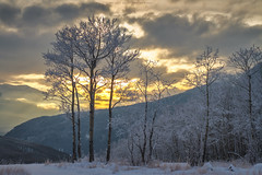 (patrickgkelly) Tags: trees sunset mountains sky clouds snow winter cold frost grandecache alberta canada