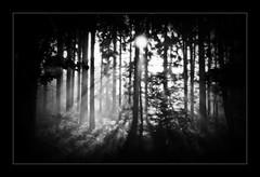 (Uli He - Fotofee) Tags: tief wald licht nebel ulrike ulrikehe uli ulihe ulrikehergert hergert nikon nikond90 fotofee sonne schatten forest light