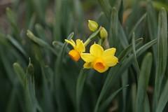 180124020 (murbozero) Tags: murbo japan flower