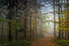 Far away (Rita Eberle-Wessner) Tags: forest wald woods bäume trees waldweg forestpath laubwald nebel fog foresttrail laub leaves pfad path tales fairytale fairyaleforest snow schnee neuschnee wintereinbruch odenwald zauberwald märchenwald twb