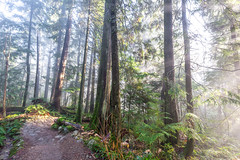 Mt. Seymore Hike-4 (hotcommodity) Tags: hiking outside outdoors adventure winter mountain forest pacific northwest nature landscape trees sunbeams sunshine volumetric light fog moss green ferns highlight beautiful bc mtseymour canada vancouver