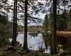Lochan a Ghleannain (vxisme.) Tags: trossachs lochanaghleannain aberfoyle mirror trees woods scotpine olympusem1