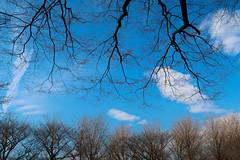 February sky (namhdyk) Tags: february sky branches tree trees canon canonpowershot canonpowershotg7x
