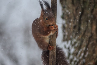 Eating during Snow Storm