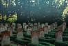 sacrificed (Walther Le Kon) Tags: website potentialfarbe analog film soldatenfriedhof ehrenfriedhof russischegefallene zweiterweltkrieg wk2 secondworldwar rotearmee redarmy lastresort rip restinpeace letzteruhestädte hammerundsichel russenstern roterstern opfer geopfert sacrificed