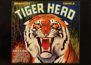 Tiger Head Orange Crate Label (1920-1930). Historical Postcard No. 152, published by Marilyn Blaisdell. San Francisco (1986)