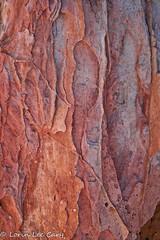 White Dome Trail #1 (lorinleecary) Tags: nevada patterns rock valleyoffirestatepark whitedometrail sandstone texture