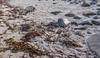 Forsøl Hammerfest 7 (sirpamak) Tags: norway norja hammerfest forsøl syksy autumn beach ranta