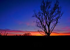 12mm12_1024w (Chuckcars) Tags: colorado montrose usa uncompaghre plateau sunset tree sky clouds