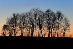Möhnesee - Haarstrang (Michael.Kemper) Tags: canon eos 6d canoneos6d ef f4l f4 l usm deutschland germany nrw nordrheinwestfalen northrhinewestphalia westphalia möhnesee moehnesee möhne moehne see lake kreis soest gemeinde flus fluss river reservoir mohne mohnesee haarstrang wippringsen 70200 canonef70200f4lusm tree trees baum bäume sonnenuntergang sunset blue hour blaue stunde blauestunde bluehour winter