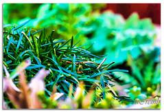 Still green (Bizon1) Tags: sigma180mmf35 nature green art flower garden painting