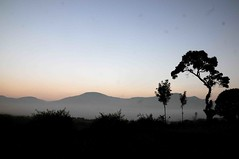 DSC_4474 (rajashekarhk) Tags: arakuvalley andhrapradesh southindia sky sunrise india travel tourism travalphotography tourist tribal tribalvillage tree silhouette rajashekar hkr landscape mistymorning mist nikon nature