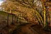 _DSC0054 - Footpath (SWJuk) Tags: swjuk uk unitedkingdom gb britain england lancashire bolton wayohreservoir entwistlereservoir footpath path trail overhanging trees leaves fence shade light sunlight winterlight leafless 2018 jan2018 winter nikon d7100 nikond7100 18300mm rawnef lightroomclassiccc