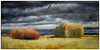 Ranchers and Eagles ~ Original Tanka Poem (Johnrw1491) Tags: cattle ranch meadow desert aspen grove willows winter eagle flight textures digital fine art landscape oregon