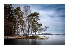 Winter at Görväln (Andreas Larzon Photography) Tags: ice lake landscape landscapephotography nikond7200 shoreline sigma24105mmf4dgoshsmart snow sweden tree trees winter görvälnnaturereserve järfälla birch pinetree