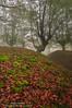 Los musgos (Pruden Barquin) Tags: ambiente atmosfera arbol bosques basque basquecountry bizkaia colores colors disparador d90 exposición exposure 3545 fotografia filtroslee forest fog filterslee gorbea gorbeia gobeia hayas hayedos hayedo hojas paisaje paisajes nikon nikkor1024 nikond90 nikkor naturaleza nature otoño otoñal otoñales orozco prudenbarquin paisvasco polarizador photography parquenatural musgo musgos expresion hoya vizcaya luz landscape largaexposicion lee light long larga l