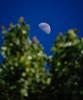 Moonrise, Middletown, New York (nsandin88) Tags: trees astronomy tree nature d7100 sky moon nikon perspective explore exploration