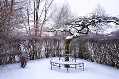 Winterwunderland (blichb) Tags: 2018 baum baumbank bayern chiemgau deutschland leicaq leicasummilux11728 oberbayern rosenheimerland ulme blichb garten meingarten schnee winter