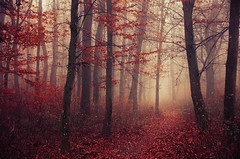 Fading Autumn V. (Zsolt Zsigmond) Tags: autumn fall forest trees woodland nature november seasonal red fog mist foggy misty path footpath hike outdoors hungarian realitydream zsolt zsigmond serene relaxing tree wood woods