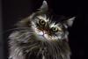 Che fai? (Ondablv) Tags: le chat minù micio cat felino gatto gatta gattona gattone micione miciona miao cats portrait ondablv gatti mici felini animale buffo simpatici simpatico animali black white bianco nero occhio eyes fuoco focus trasparente sguardo