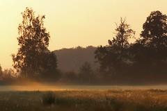 Misty morning (pszcz9) Tags: polska poland przyroda nature natura mgła fog wschódsłońca sunrise pejzaż landscape beautifulearth sony a77