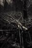 Tröstande oreda..- (hajlana) Tags: nature wood dark chaos