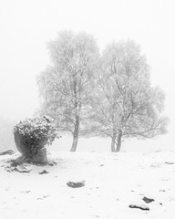 1 2 (Theolde) Tags: hasselblad digital snow mist trees