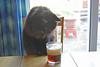 Taster (Caulker) Tags: cat ale glass