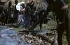 HG3-1-002b (Stichting Papua Erfgoed) Tags: henkgeut papua irianjaya nieuwguinea stichtingpapuaerfgoed irianbarat varkensfeest baliem