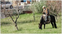 Resting.. (@ tameristan) Tags: horse man horseman oldman village rider food grass field weather nature animal tameristan nikon nikoncoolpixa900 nikona900 streetphotography street lucky