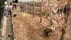 2018_01-24n (gkoo19681) Tags: beibei chubbycubby fuzzywuzzy treattime specialdelivery personalattention sugarcane soyummy sohappy nannies toocute spoiled goodboy ccncby nationalzoo