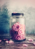 Blush (AJWeiss71) Tags: rose roses jar pink stilllife flower flowers floral romance romantic vintage nostalgia nostalgic beauty beautiful pastel delicate fragile fragility glass petal petals amyweiss
